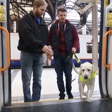 Man with guide dog stepping on board a train with an instructor beside him