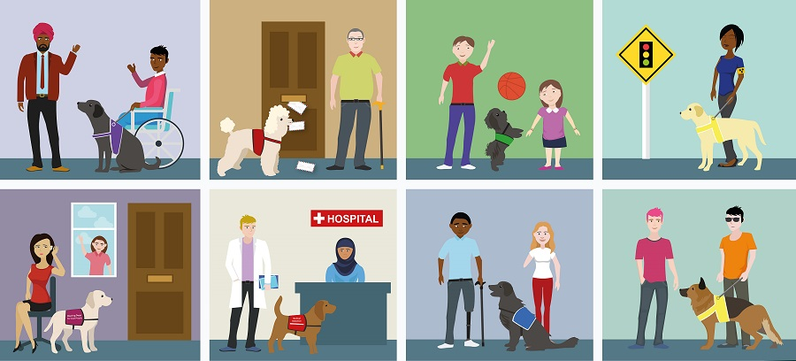Graphic showing various guide dog types with their owners